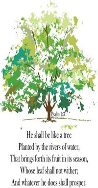 He shall be like a tree