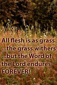 info-grass